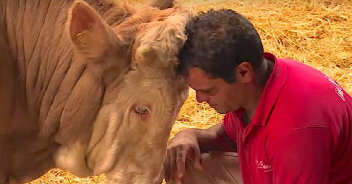 This Bull Spent His Life Chained To A Rail - Watch His Reaction To The Man Wearing Red