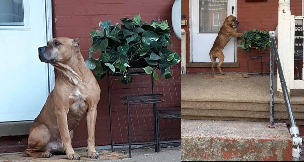 Abandoned Heartsick Dog Waits For Weeks By Front Door Unaware His Family Moved Away